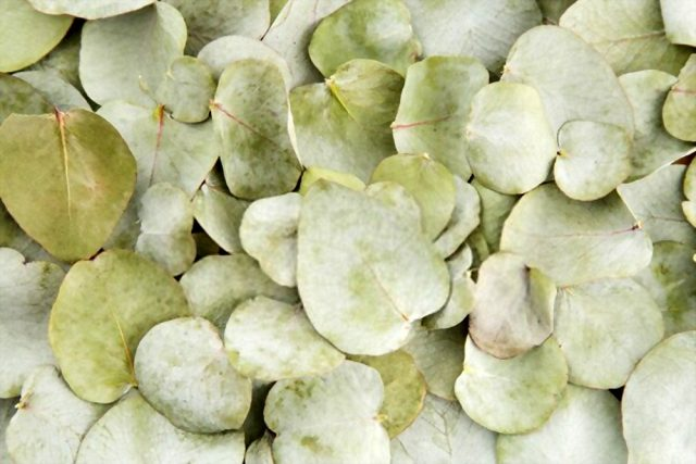 Frunze de eucalipt pentru confetti organic (Pachet 100g)