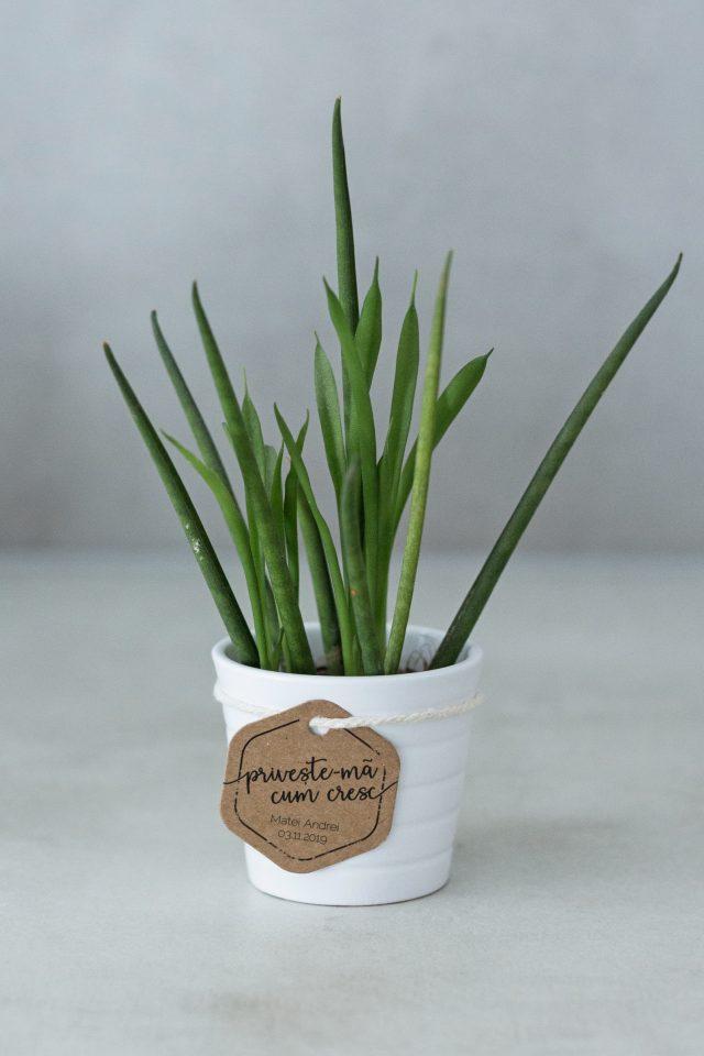 Taguri PERSONALIZATE pentru plante suculente